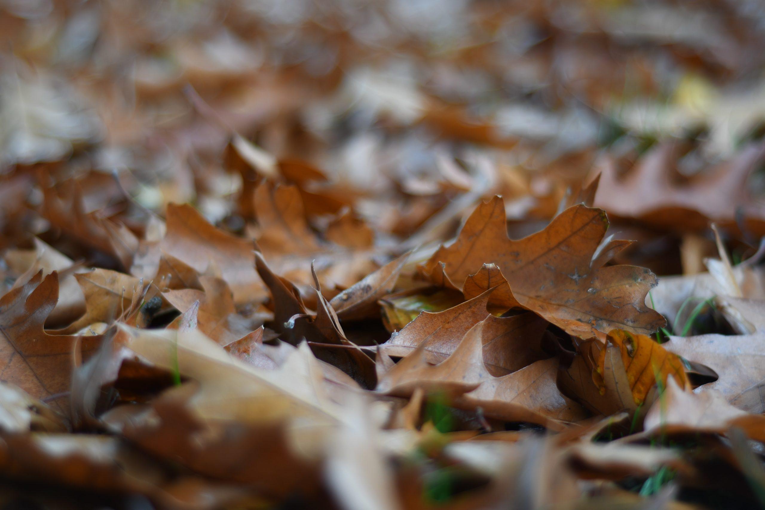 Dead tree leaves